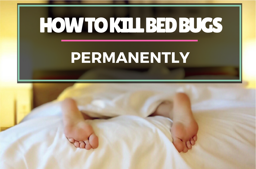 how-to-kill-bed-bugs-permanently