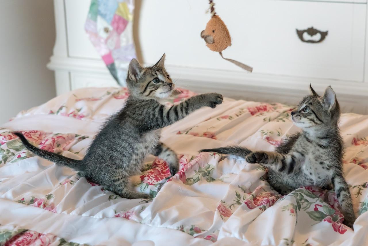 pets-in-bedroom-allergens