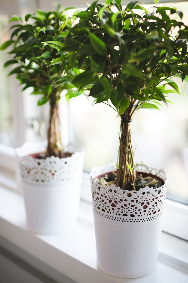 houseplants-allergens