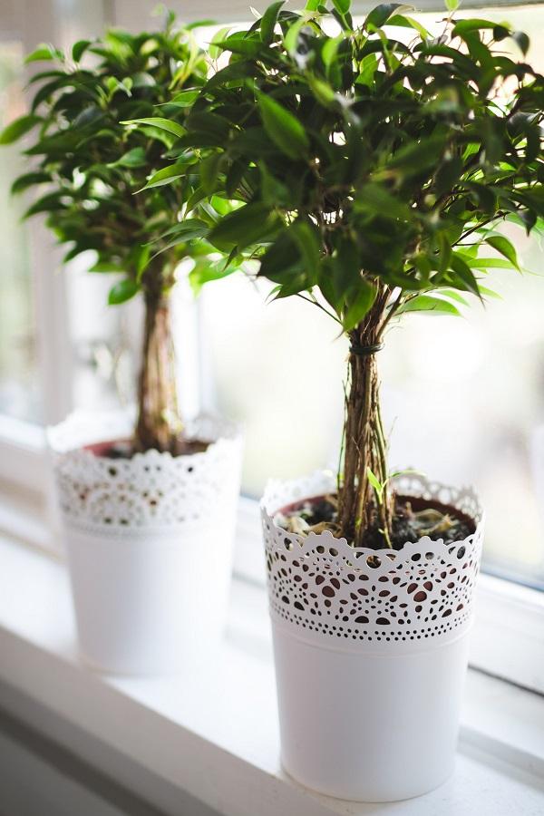 houseplants-allergens
