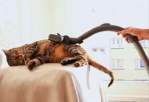 vacuum-cleaner-for-pets