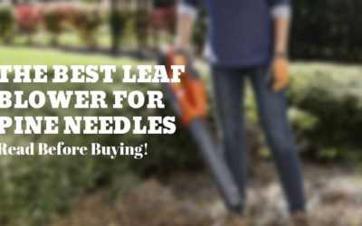 The Best Leaf Blower for Pine Needles (2019)